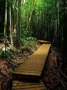 Hawaii...cool hiking trails...Pipiwai Trail, Haleakala National Park Kipahulu Wilderness Area, Maui