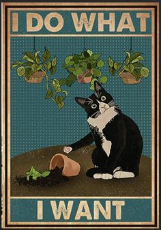 Cute Cats, Funny Cats, Funny Animals, Cute Animals, Crazy Cat Lady, Crazy Cats, Art And Illustration, Illustrations, Cat Posters