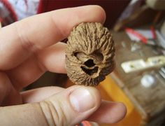 A walnut that looks like Chewbacca...