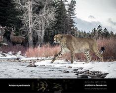 Prehistoric World, Prehistoric Creatures, Big Cats, Cool Cats, Extinct Animals, Pet Chickens, Fauna, Mammals, Habitats
