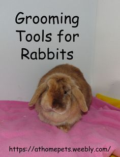 Grooming Tools for Rabbits - AT HOME PETS Long Haired Rabbits, Rabbit Brush, Dwarf Rabbit, House Rabbit, Small Cat, Loose Hairstyles, Cool Tools, Pet Store, Dog Cat