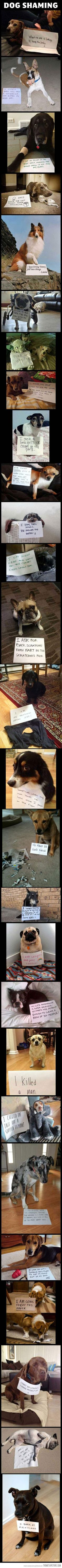 The ultimate dog shaming compilation…FLIPPIN HILARIOUS!! But you can't read them because the writing is so little ;-(
