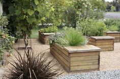 wooden planter benches with herbs & vegetables within a bed of decomposed granite, in an edible front yard garden in southern California, by Artecho Architecture + Landscape Architecture