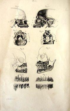 1846 Antique anatomy skull print vintage by LyraNebulaPrints
