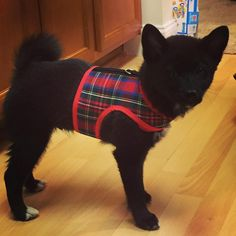 Classic Tartan Plaid Small Dog Harness dog harnesses Made in