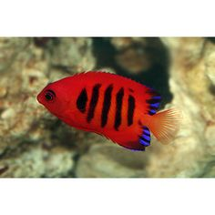 1000 images about ichthyology o o on pinterest cool for Petco koi fish