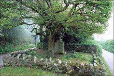 The Salcombe Regis Thorn