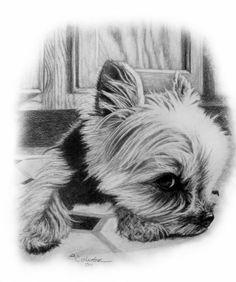 The Little Yorkie Sketch http://www.gensart.net