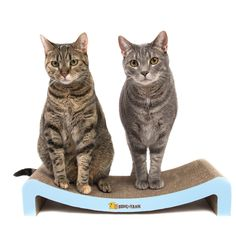 Durable Cat Scratcher Lounge by Bone and Yarn >>> Check this outstanding product by going to the link at the picture. (This is an affiliate link). Cardboard Cat Scratcher, Cat Company, Giant Cat, Scratching Post, Cat Furniture, Cat Love, Fur Babies, Pet Supplies, Bones