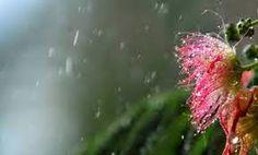 Πλησίστιος...: Καλοκαιρινή βροχή...