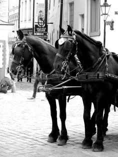 Matkojeni blogi: Tallinna ja hepat. Ikuisuusaihe