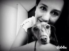 Love ❤️ dachshund