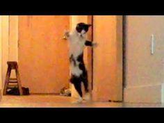 Cat's Ballet Dance