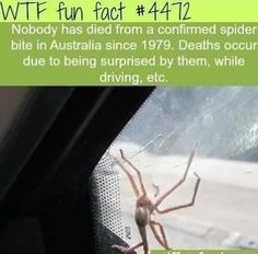 Surprised by spiders, equals death
