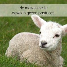 The LORD is my shepherd, I shall not be in want. He makes me lie down in green pastures, He leads me beside quiet waters, He restores my soul. Has He restored your soul lately? Would you mind sharing how?