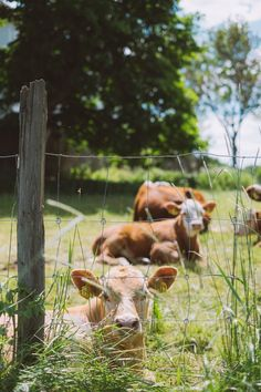 Dairy Cattle Art Country Living 34 Ideas For 2019 Country Farm, Country Life, Country Girls, Country Living, Country Roads, Farm Photography, Animal Photography, Farm Animals, Cute Animals