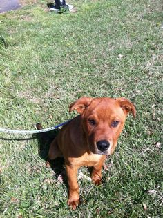 #KENTUCKY #URGENT ~ ID 3 is a male Terrier mix under 1y/o & 40lbs -- he's full of energy & great on leash & in the     FULL GASSING SHELTER      GREENUP ANIMAL CONTROL CTR -  140 Dog Gone Lane   #Greenup KY 41143  Ph 606-473-5711