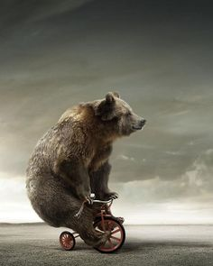 Bear on a bike :)
