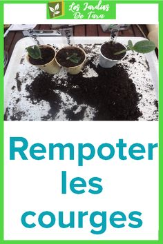 Rempoter les courges