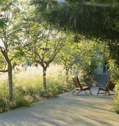 love the sunlight in the grasses - burt residence, san fransisco