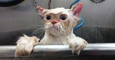 Postée il y a quelques jours sur les réseaux sociaux, la photo d'un chat est devenue – comme beaucoup d'autres avant elle – virale. Et vous allez vite comprendre pourquoi…