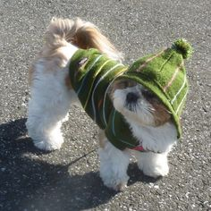 Dog hopes his friends don't see him wearing the sweater his grammy knitted for him.