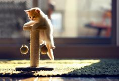 Cute Cat Photography by Ben Torode | Cuded
