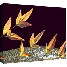 Dean Uhlinger Natural World Gallery-Wrapped Canvas, Size: 24 x 32, Brown