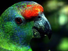 Venezuela está ubicada entre los 7 países con mayor variedad de aves sabías eso?  Se han reportado más de 1400 especies de aves en nuestro país esas son muchísimas. Hagamos un ejercicio! cuenta cuantas aves puedes recordar justo en este momento. Cuántas son?