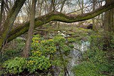 Moerasexcursie Stamproy - Weertdegekste.nl|Weertdegekste.nl