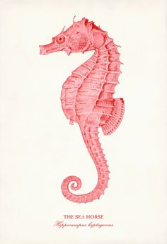 2014 coral pink seahorse giclee print - shabby chic digital art print poster from vintage scientific-f67070.jpg (1026×1500)