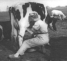ook moeders de vrouw hielp  met melken - Auch Mütter,die Bauersfrau, half beim Melken der Kühe!
