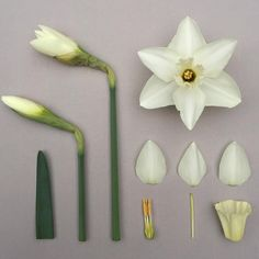 Цветы из холодного фарфора. Подарки