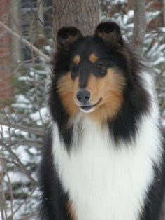 I grew up with a beautiful guy like this, his name was Prince.  I miss him :(