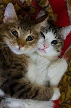 고양이,아기고양이,