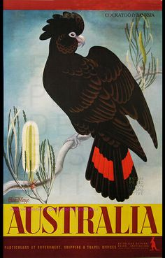 EILEEN MAYO AUSTRALIA COCKATOO AND BANKSIA by estampemoderne.fr, via Flickr