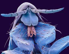 Insectos y arañas a la luz mágica del microscopio electrónico  Los insectos más cotidianos como moscas, hormigas o pulgasentre otros animales muy comunes se transforman, observados muy de cerca, en seres que parecen salidos de un mal sueño.  En estas veinte imágenes se pueden ver las posibilidades técnicas y artísticas de la fotografía con microscopio de barrido electrónico.