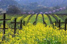 Alexander Valley, California