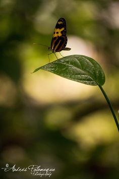Flickr Insects, Animals, Lights, Life, Fotografia, Animales, Animaux, Animal Memes, Animal