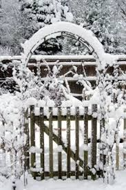 Image result for snow gardens