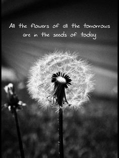 All the flowers of tomorrow are in the seeds of today. Dandelion Quotes, Dandelion Clock, Dandelion Wish, Dandelion Flower, Douglas Adams, Wish Quotes, Quotes To Live By, Wild Flower Quotes, Garden Quotes