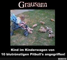 Child attacked by 10 bloodthirsty pitbulls! Cute Funny Animals, Funny Cute, Funny Dogs, Tierischer Humor, Man Humor, Funny Diet Memes, Hilarious Memes, Weight Loss Humor, Cute Little Puppies