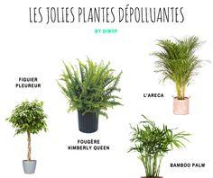 L'air intérieur est de 5 à 10 fois plus pollué qu'à l'extérieur !  #diwyp #doitwithyourplants