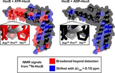Nucleotide-Dependent Interactions within a Specialized Hsp70/Hsp40 Complex Involved in Fe–S Cluster Biogenesis