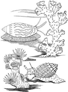 Sea Snails coloring page from Sea snail category. Select from 24873 printable crafts of cartoons, nature, animals, Bible and many more. Ocean Coloring Pages, Animal Coloring Pages, Coloring Book Pages, Free Coloring, Coloring Pages For Kids, Coloring Sheets, Printable Crafts, Printable Coupons, Printables