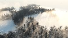 La forêt étoilée - B