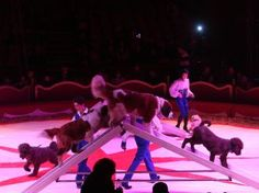 Dogs Duffy, Wrestling, Dogs, Lucha Libre, Pet Dogs, Doggies