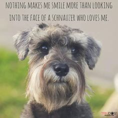 We have had Schnauzers for 30 years and we just lost our last one in April. Miss my Tucker so much. They are each individuals and irreplaceable treasured friends.