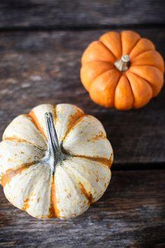 Pumpkins by hannah * honey  jam
