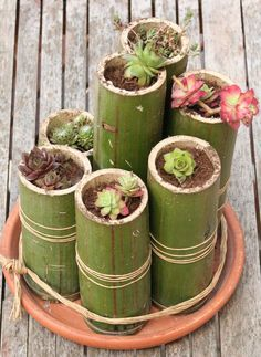 nice 43 Popular Air Plant Display Ideas For Home Flower Planters, Diy Planters, Garden Planters, Succulents Garden, Flower Pots, Planter Ideas, Bamboo Planter, Bamboo Art, Bamboo Crafts